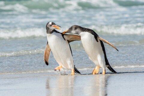 Линус Торвальдс официально выпустил ядро Linux 5.9